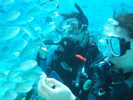 タリマで体験ダイビング