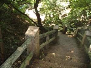 Grott 117