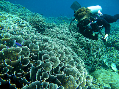 Coral reef at Bunaken Island