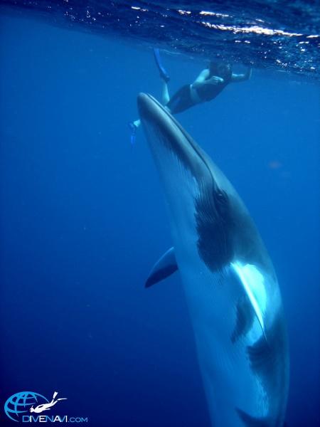 SOFミンククジラCNS