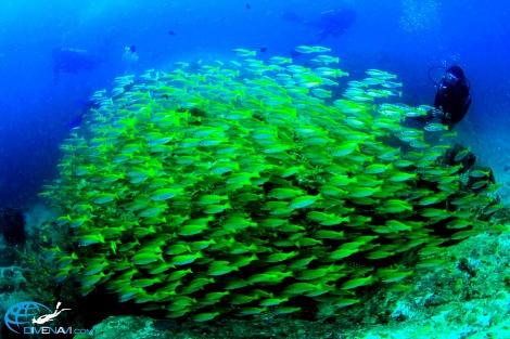 リペ島 (3)
