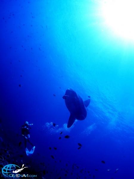 バリ島 (4)